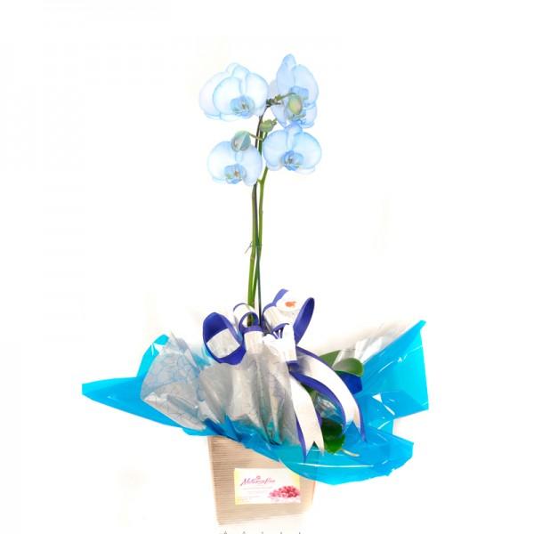 Vaso de Planta Orquidea Azul